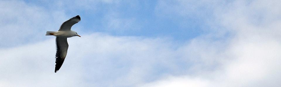 Polarsirkelsonen